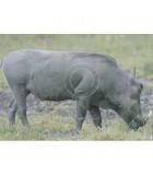 blason chasse,nature,animaliers,